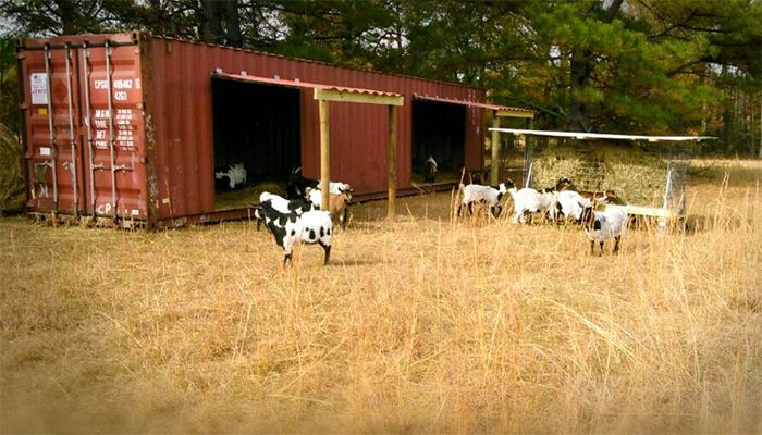 pentingnya cattle container